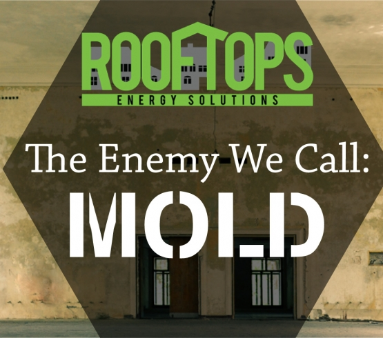 The Enemy We Call: MOLD | Roofing Boise
